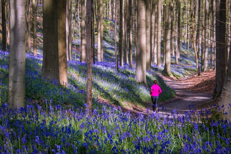 Bosque mágico imagen de archivo