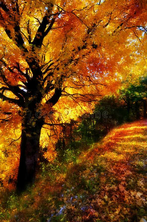 Bosque mágico anaranjado fotos de archivo libres de regalías