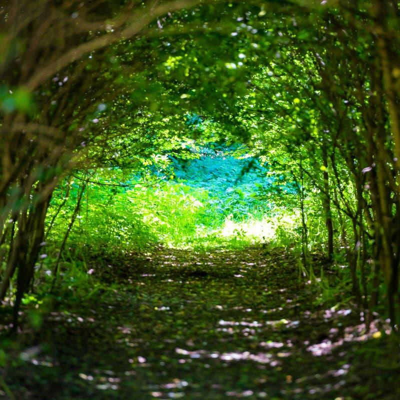 Bosque mágico con la trayectoria a la luz imágenes de archivo libres de regalías