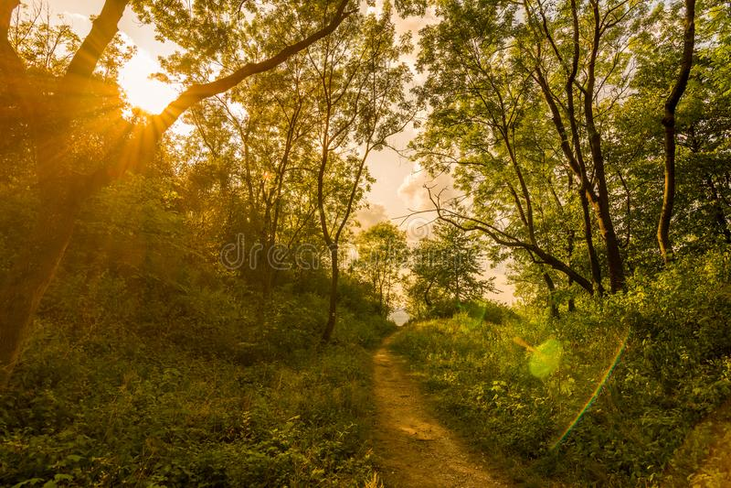 Bosque mágico con los rayos del sol Trayectoria en el bosque, los árboles, la hierba y los arbustos Colores mágicos fotos de archivo