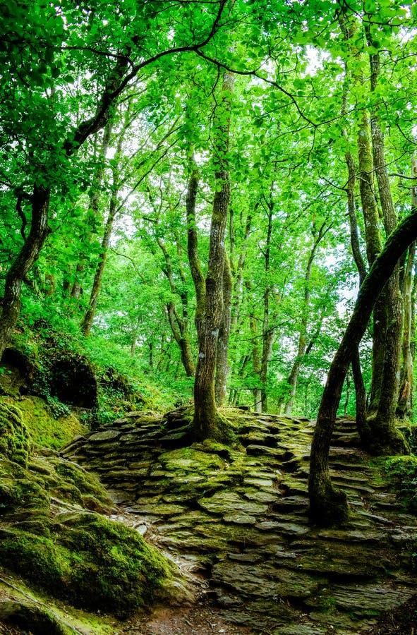 Bosque mágico de Brocéliande, Francia foto de archivo