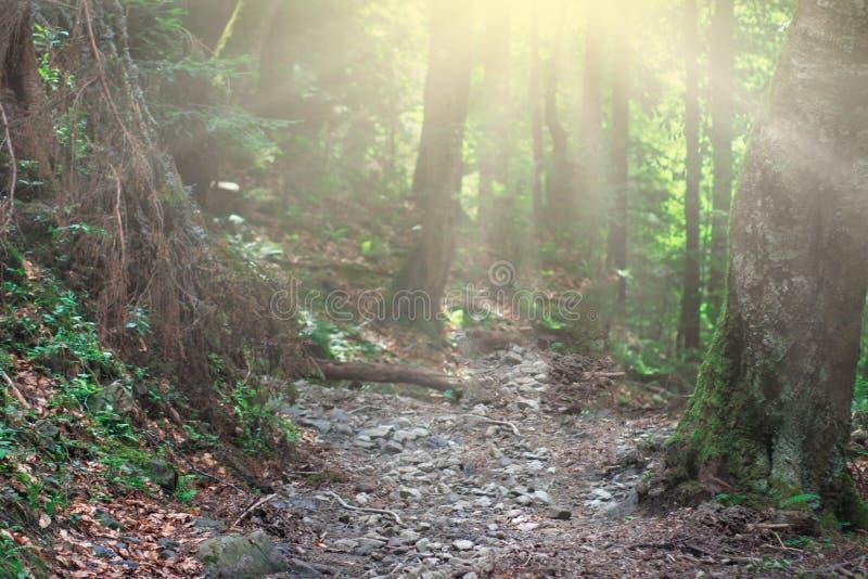 Bosque mágico de la naturaleza con sol fotos de archivo