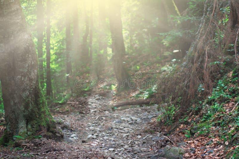 Bosque mágico de la naturaleza con sol imágenes de archivo libres de regalías