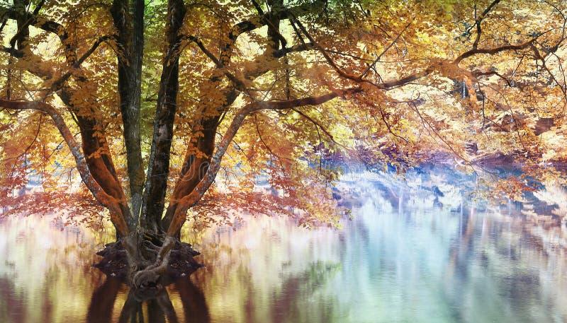 Bosque mágico del paisaje fotografía de archivo