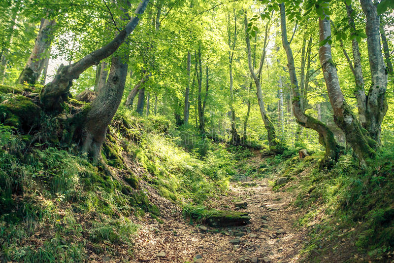 Bosque mágico en el sol de la mañana Bosque de hadas en otoño Escena dramática y imagen pintoresca Natural maravilloso foto de archivo libre de regalías