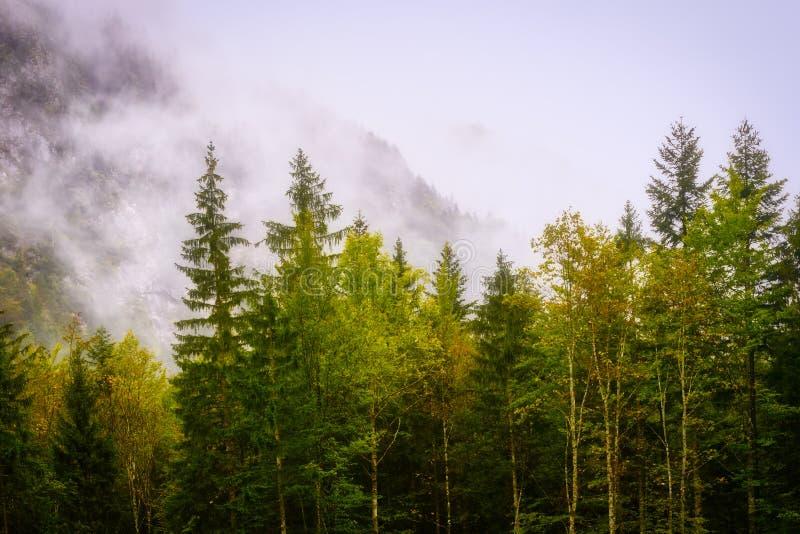 Bosque mágico en luz de la mañana con niebla imagen de archivo libre de regalías