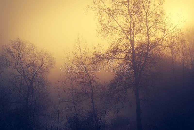 Bosque místico al día de niebla imagen de archivo libre de regalías