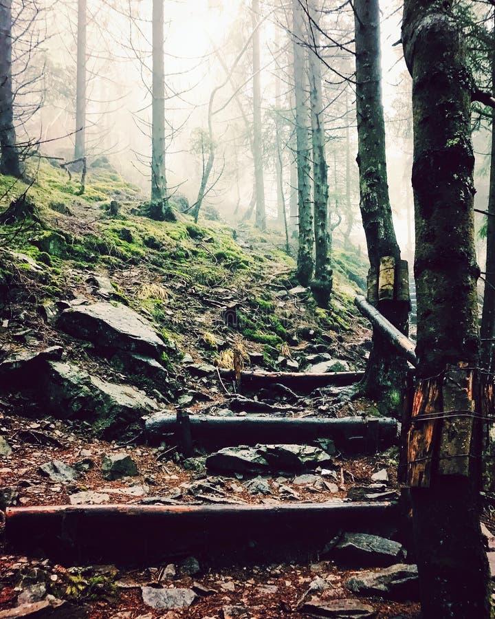 Bosque místico del otoño imagen de archivo libre de regalías