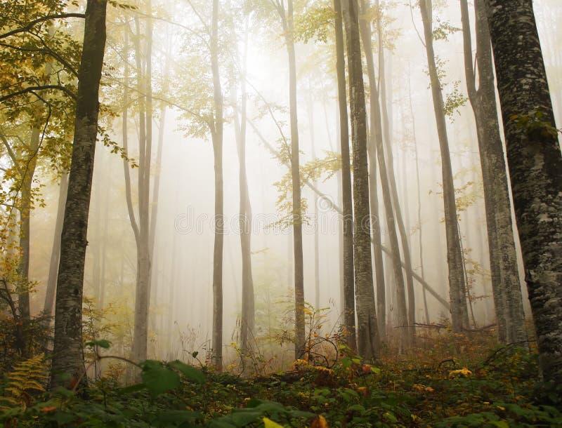 Bosque místico del otoño fotografía de archivo libre de regalías