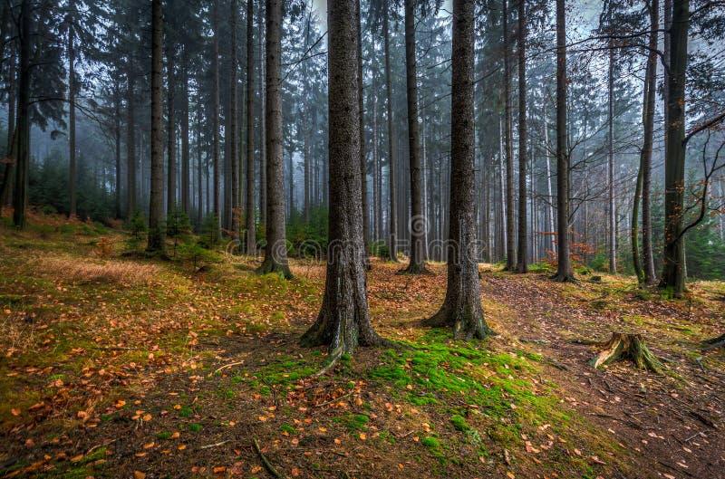 Bosque místico espeluznante con la hierba verde y árboles caidos coloridos en la montaña de Checo Moravian foto de archivo libre de regalías