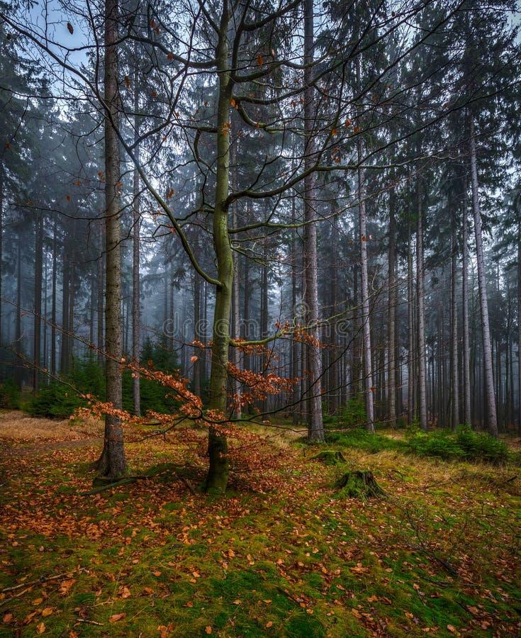 Bosque místico espeluznante con la hierba verde y los árboles caidos coloridos imagen de archivo