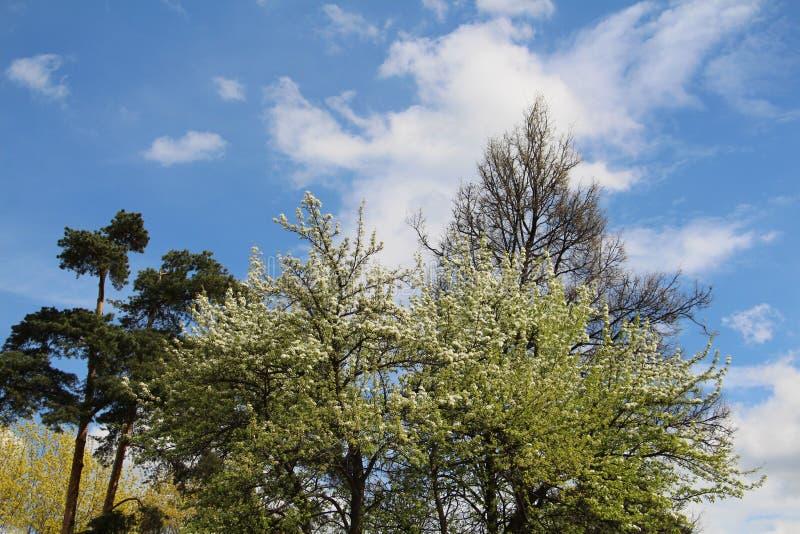 Bosque mezclado - con?fero y ?rboles de hojas caducas en el mismo bosque imagen de archivo libre de regalías