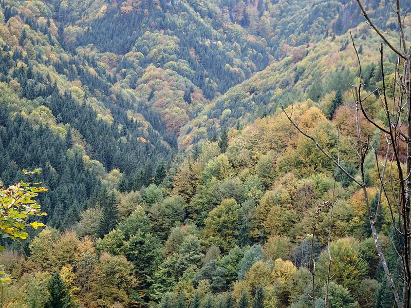 Bosque mezclado del otoño hermoso imagen de archivo