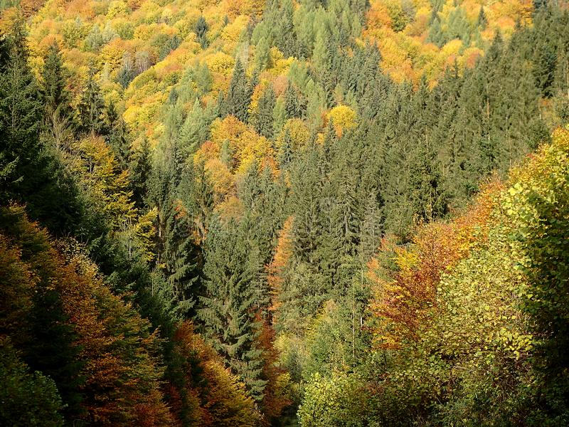 Bosque mezclado del otoño hermoso foto de archivo