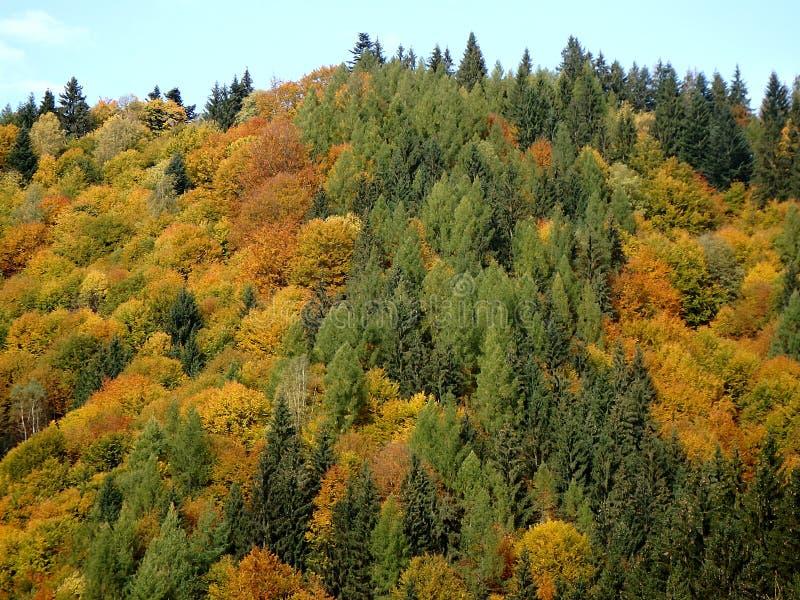 Bosque mezclado del otoño hermoso imagen de archivo libre de regalías