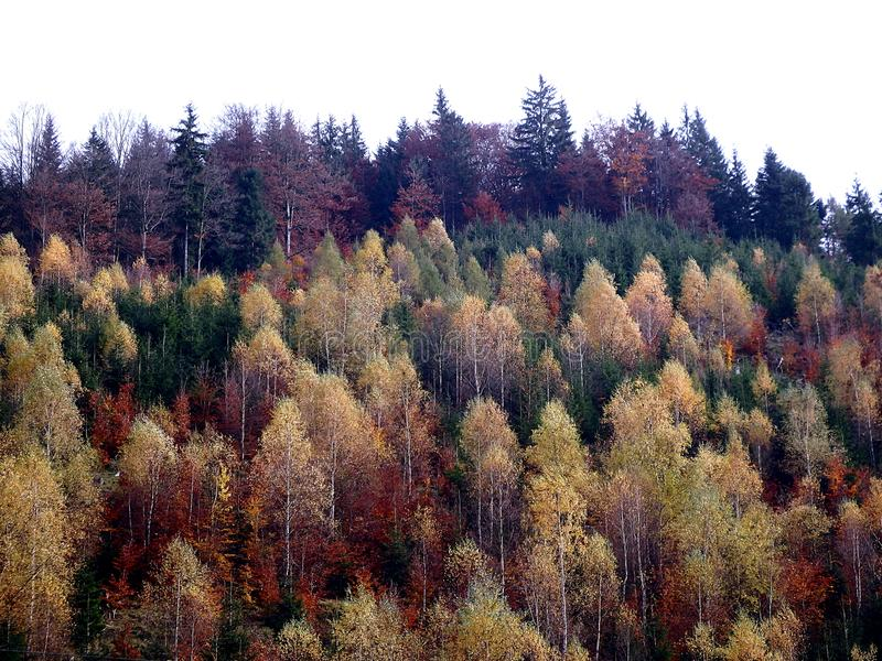 Bosque mezclado del otoño hermoso imagenes de archivo