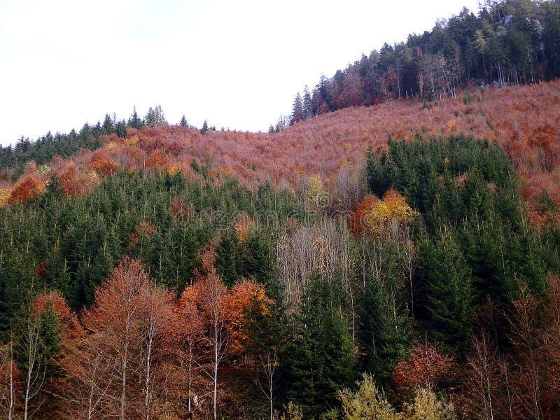 Bosque mezclado del otoño hermoso fotografía de archivo