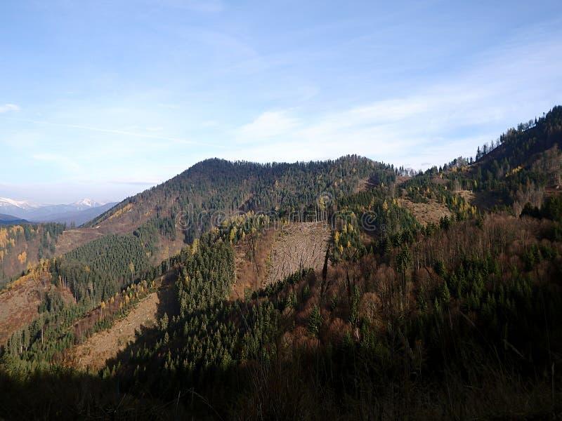 Bosque mezclado del otoño hermoso foto de archivo libre de regalías