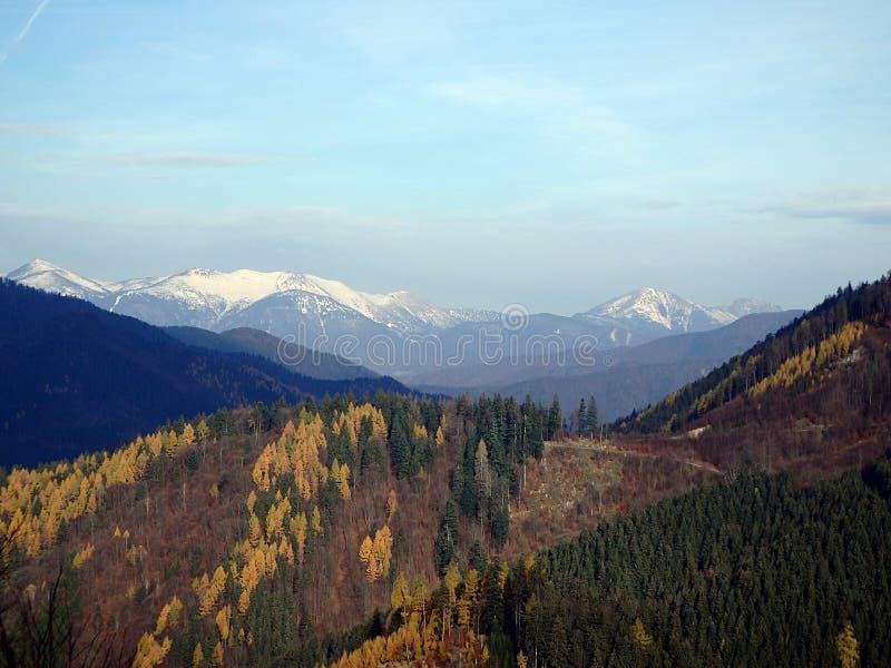 Bosque mezclado del otoño hermoso imágenes de archivo libres de regalías