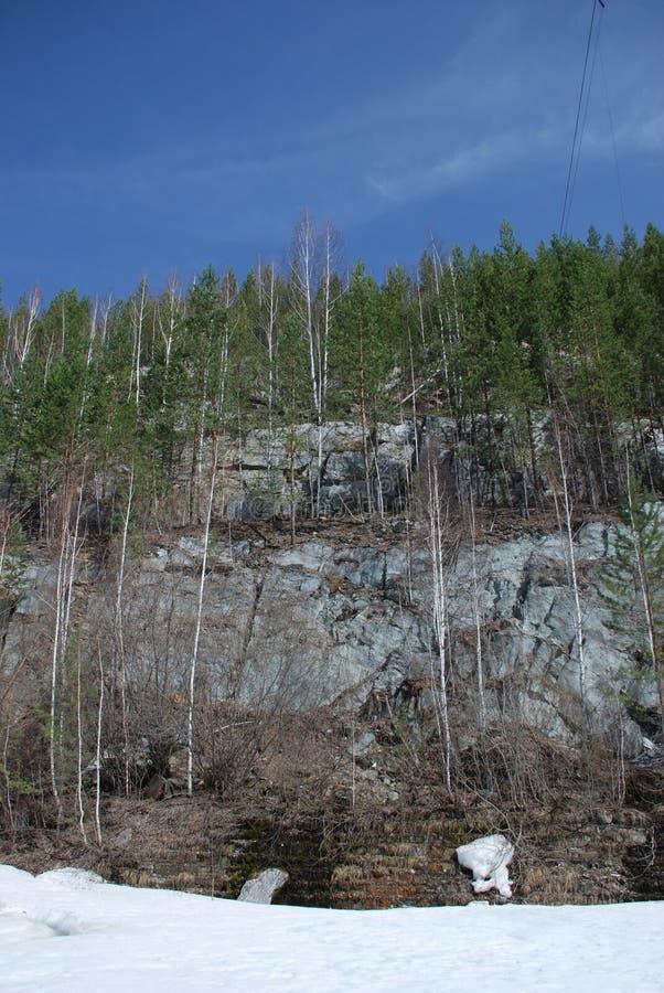 Bosque mezclado joven con los árboles imperecederos en el lado de la montaña de la roca, tiempo de primavera temprano imágenes de archivo libres de regalías