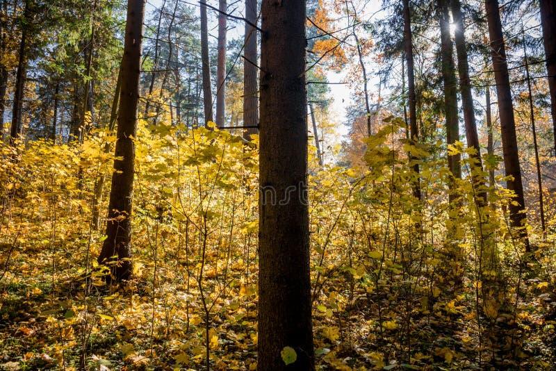 Bosque mezclado oscuro con luz del sol hermosa fotos de archivo libres de regalías