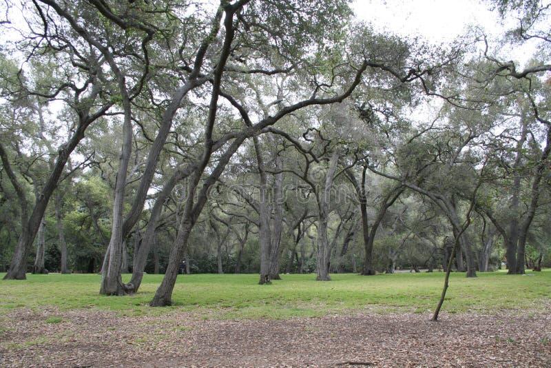 Bosque misterioso foto de archivo