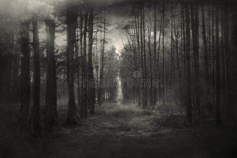 Bosque misterioso fotos de archivo