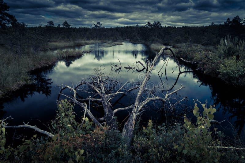 Bosque misterioso de la noche imagen de archivo libre de regalías