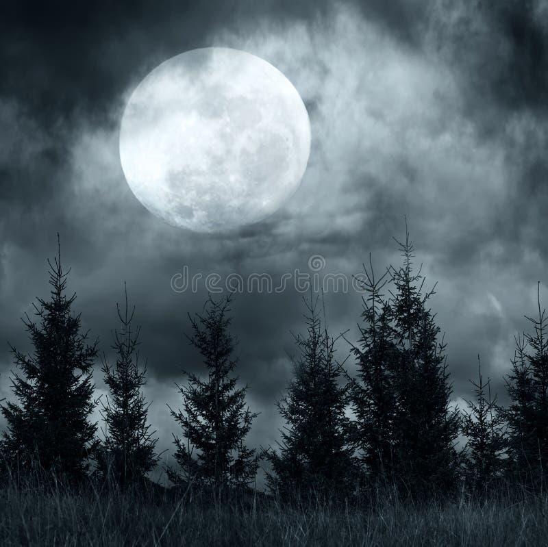 Bosque misterioso debajo del cielo nublado dramático en la noche de la Luna Llena fotografía de archivo