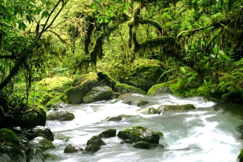 Bosque misterioso del verde de la lluvia fotografía de archivo libre de regalías