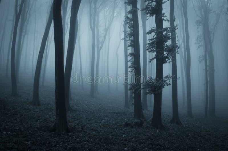 Bosque misterioso espeluznante oscuro con niebla azul imágenes de archivo libres de regalías