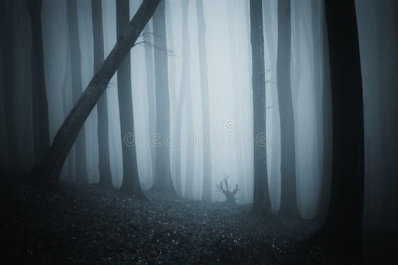 Bosque misterioso oscuro con niebla el la noche de Halloween fotografía de archivo libre de regalías