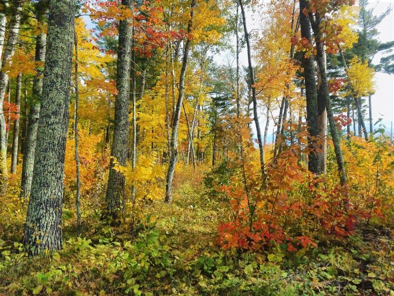 Bosque Nacional Chippeawa, Minnesota, Estados Unidos imagen de archivo libre de regalías