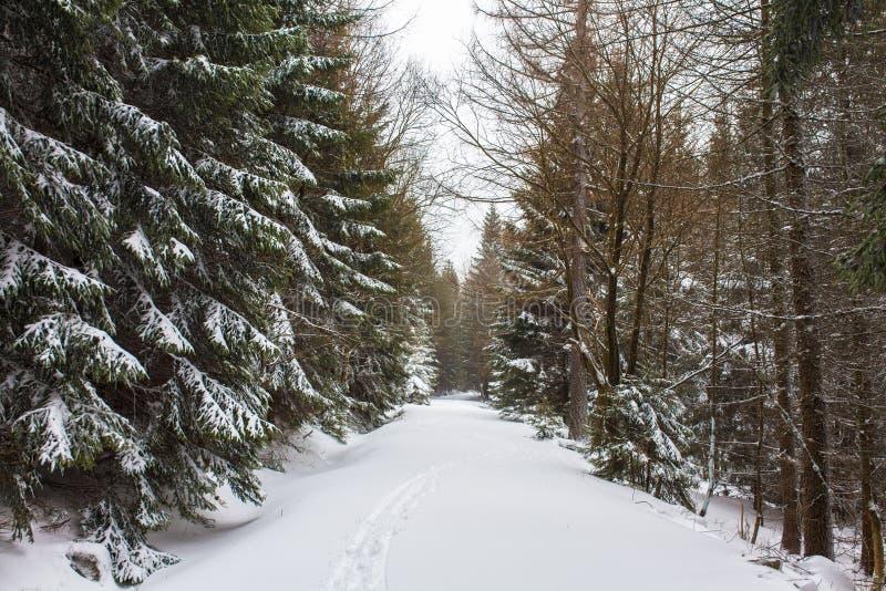 Bosque nevado del invierno fotos de archivo libres de regalías