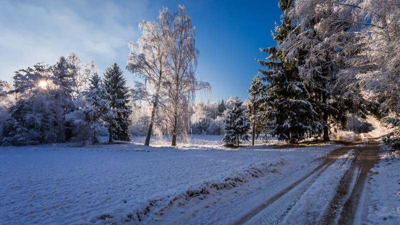 Bosque Nevado en la salida del sol en invierno en Polonia fotografía de archivo