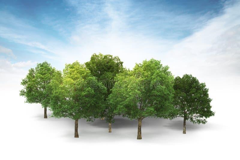 Bosque no branco com fundo do céu azul e das nuvens ilustração royalty free