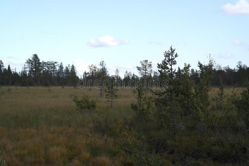 Bosque noruego foto de archivo libre de regalías