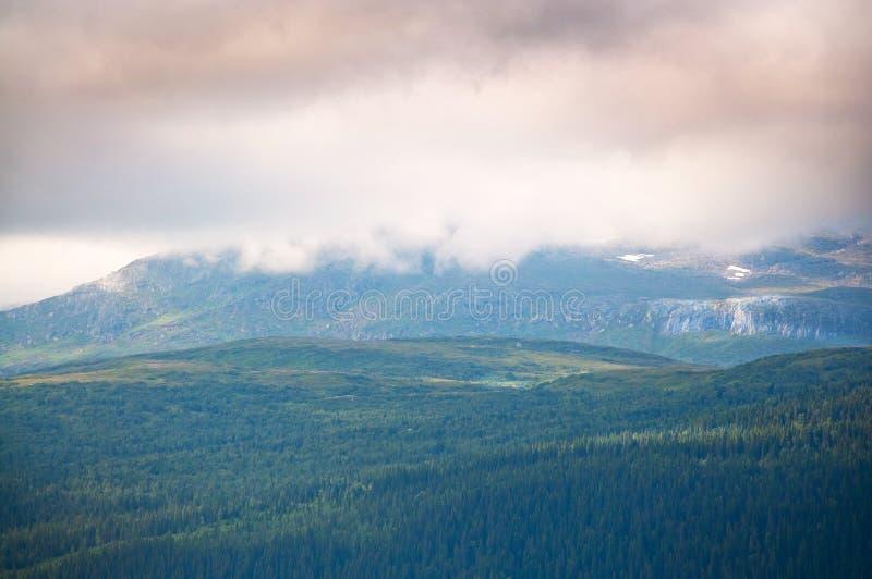 Bosque nublado de la montaña fotos de archivo