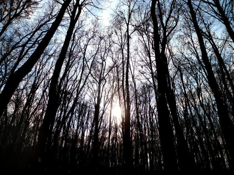 Bosque nublado del otoño fotos de archivo