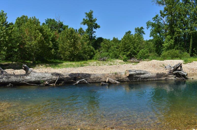 Bosque Oklahoma dos locustídeo imagens de stock royalty free