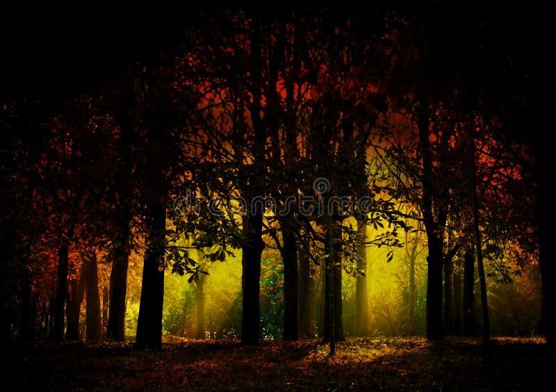 Bosque oscuro fotografía de archivo libre de regalías