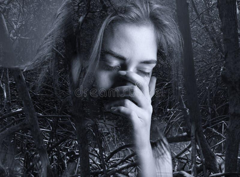 Bosque oscuro del mangle fotografía de archivo