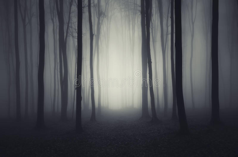 Bosque oscuro profundo el la noche de Halloween fotos de archivo