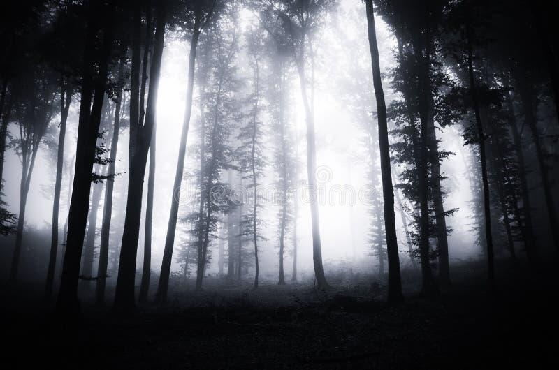 Bosque oscuro profundo en Halloween fotografía de archivo libre de regalías
