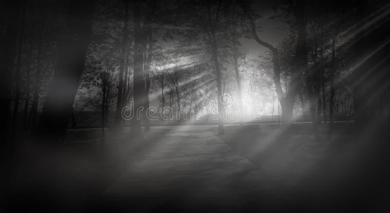 Bosque oscuro, rayos de la luz del sol a través de los árboles, un bosque mágico foto de archivo libre de regalías