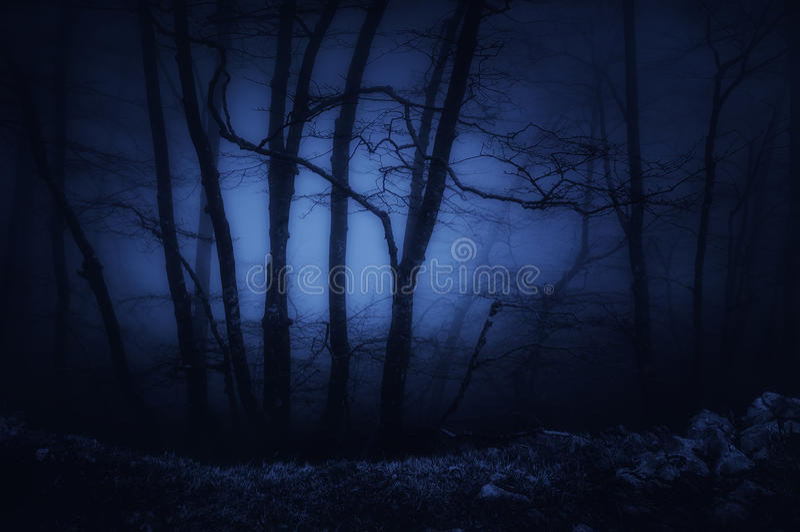 bosque oscuro y asustadizo en la noche imágenes de archivo libres de regalías