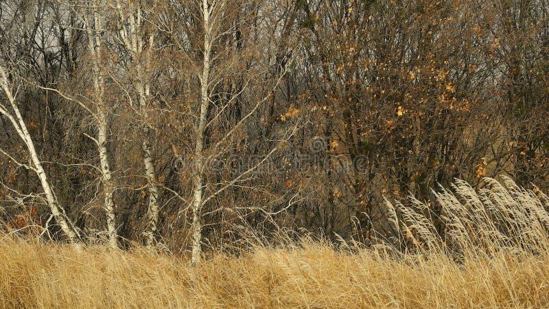 Bosque otoñal fotografía de archivo