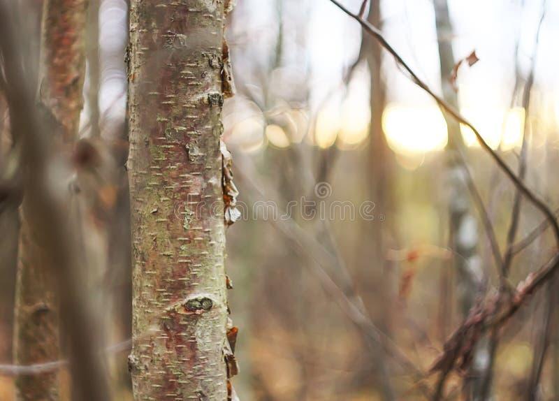 Bosque oto?al imagen de archivo libre de regalías