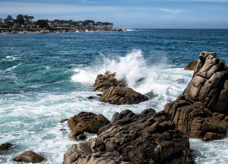 Bosque pacífico na baía de Monterey foto de stock royalty free
