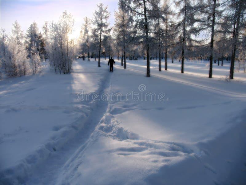 Bosque. Paisaje del invierno de la naturaleza. imágenes de archivo libres de regalías